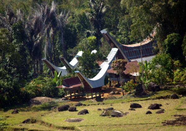 Tana Toraja Indonesia  city photos : typical Torajan house compound in the rice fields